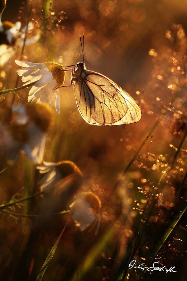 Zdjęcie makro motyla o świcie.
